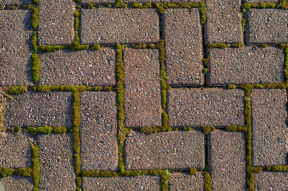 Brick and Moss Pattern